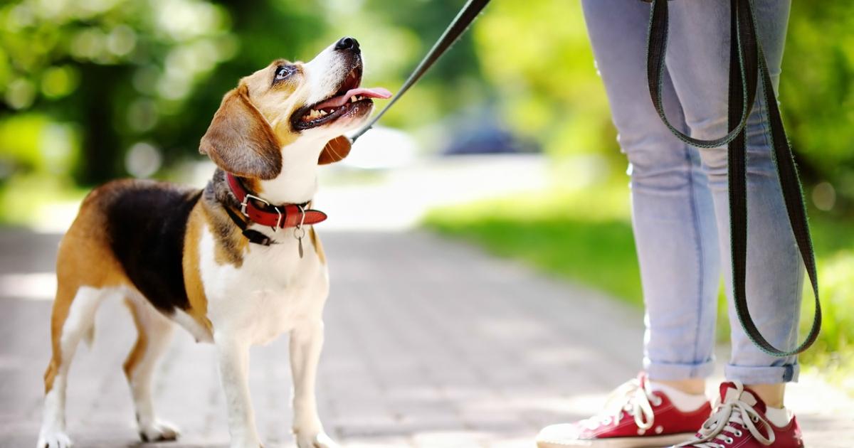 7 лучших ошейников и трекеров для собак чтобы следить за