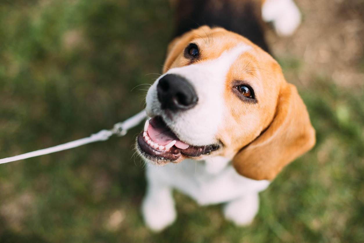 лучшие виды собак