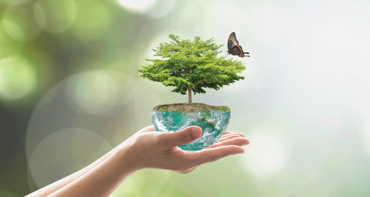 как помочь окружающей среде