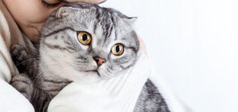 признаки стресса у кошки