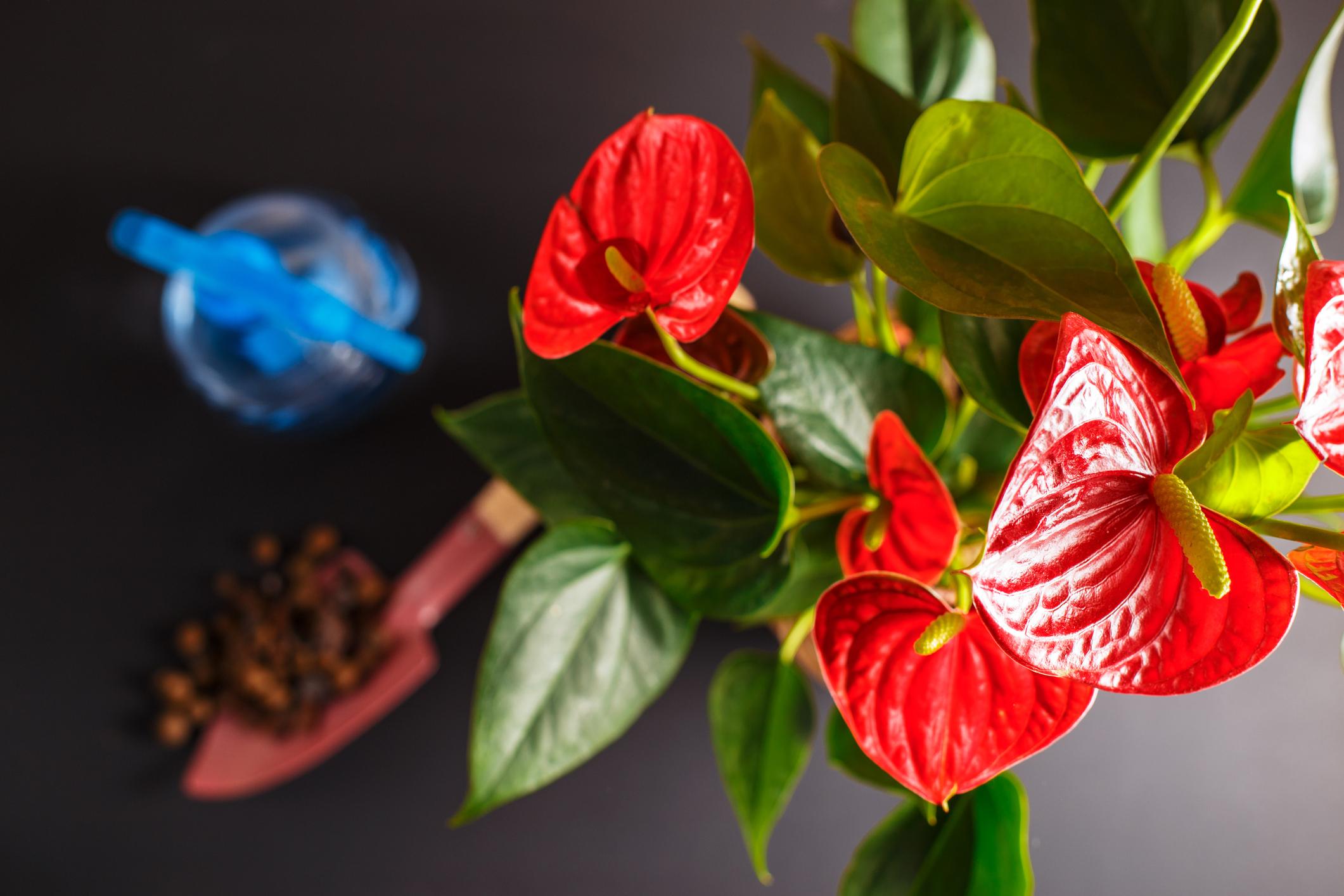 комнатные растения которые очищают воздух