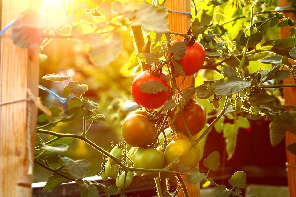 как вырастить продукты