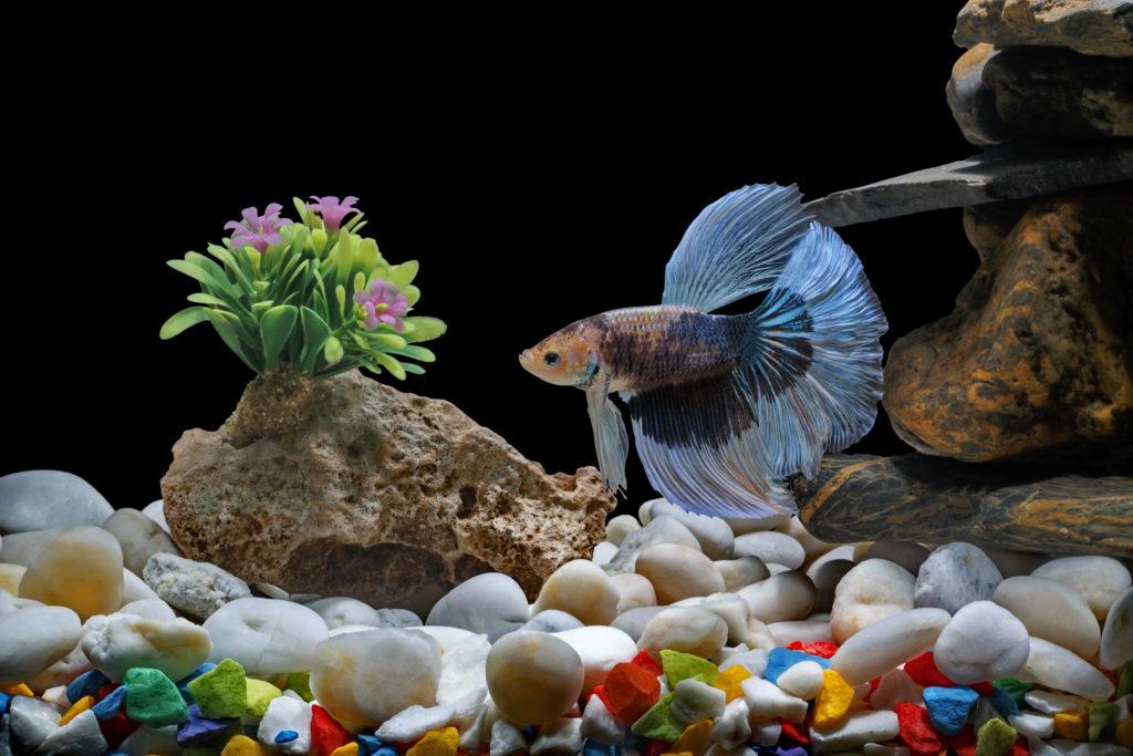 Как выбрать аквариумную рыбку