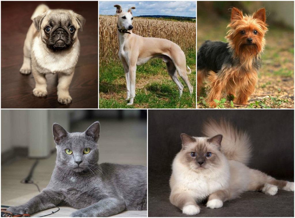 Как подобрать домашнее животное