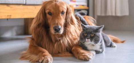 Как подобрать домашнее животное под свой образ жизни