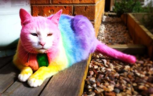 кольоровий котик